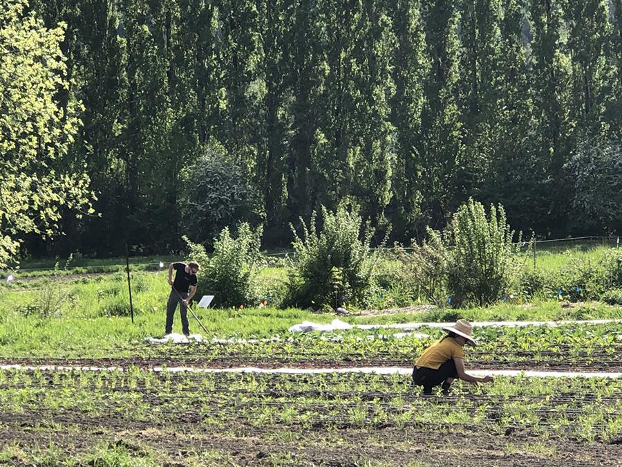 Sammamish Farmers