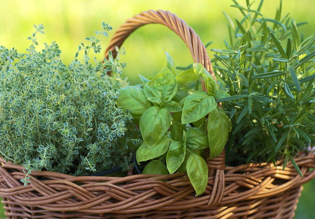 Sammamish Valley Grange herbs